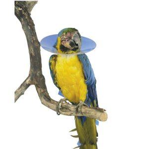 Kruuse Ovratnik za ptice SET